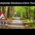 Rutte: Teeven Geen Aangeschoten Wild